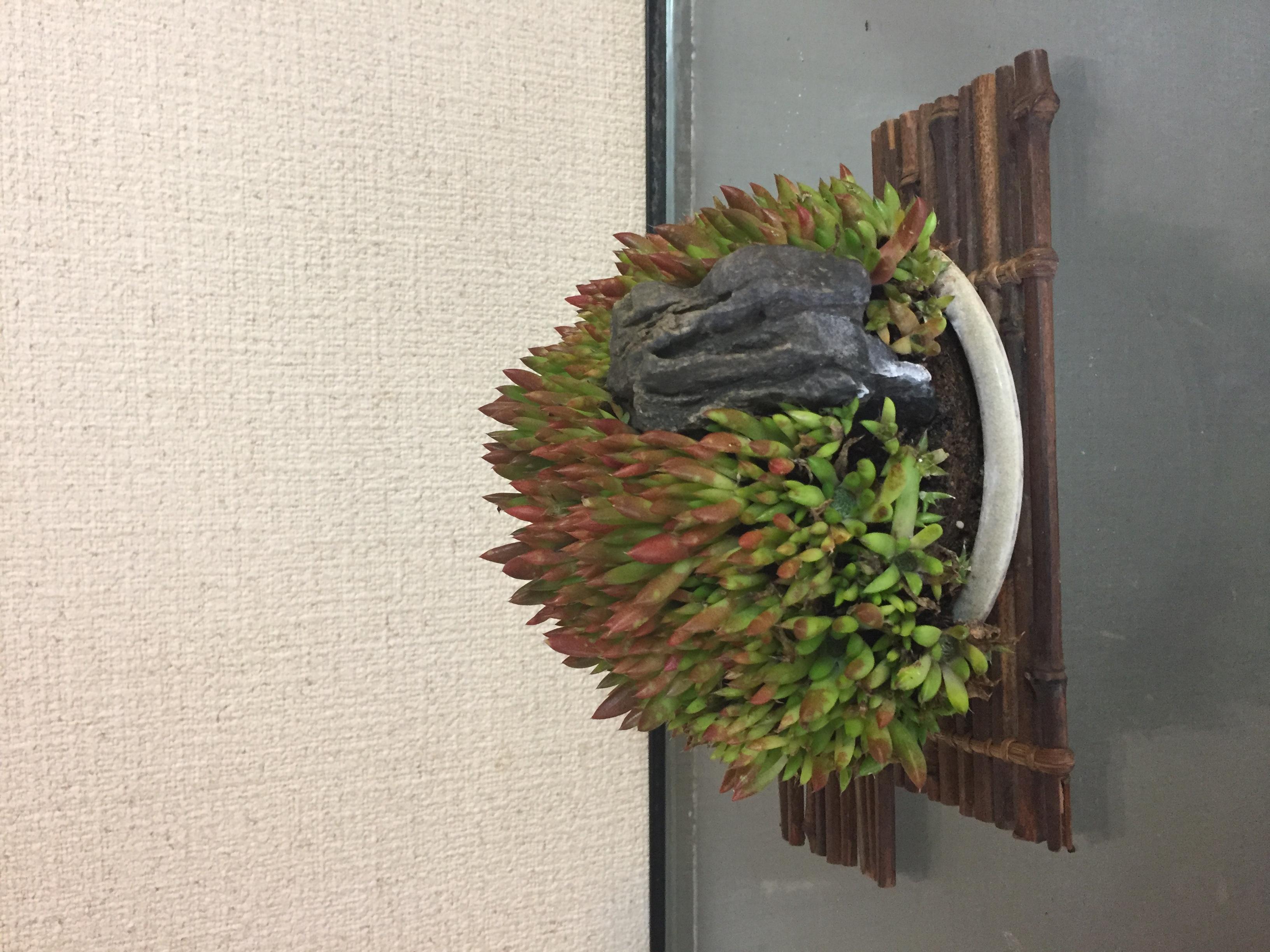 成彦 Shigehiko 盆栽 Bonsai /