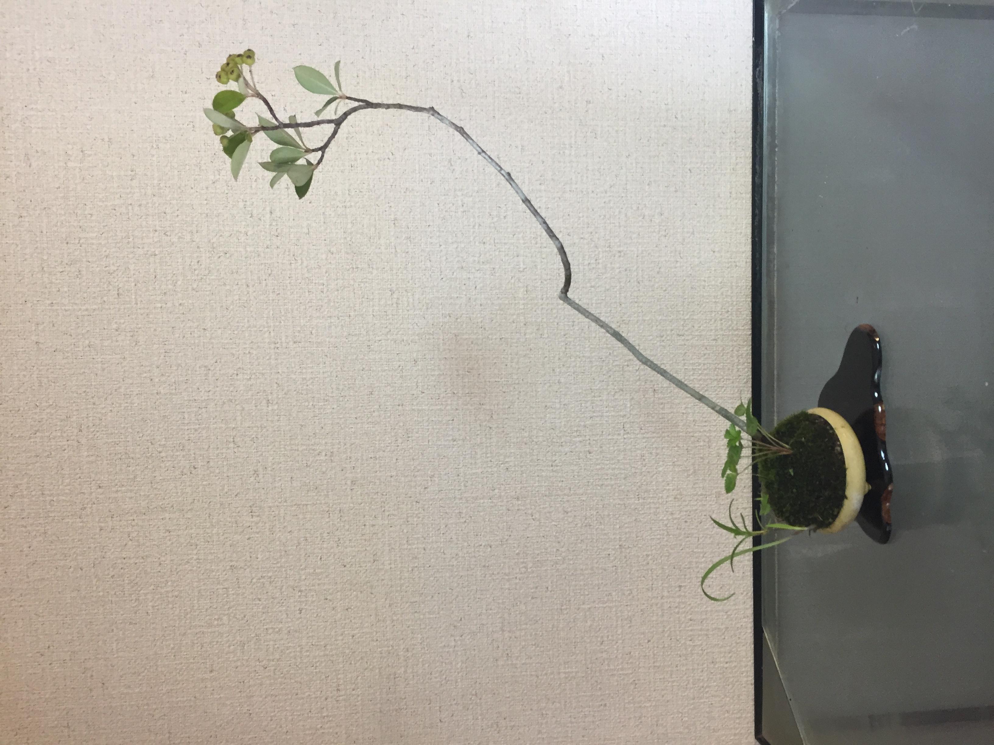 成彦 Shigehiko 盆栽 Bonsai