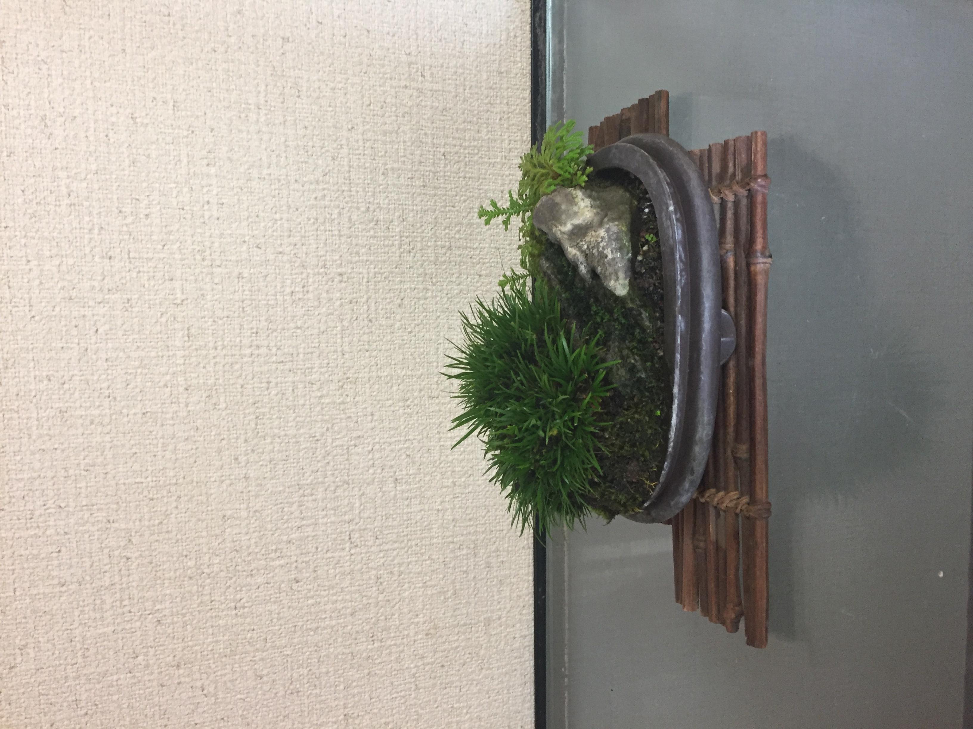 成彦 Shigehiko 盆栽 Bonsai / セキショウ 石付