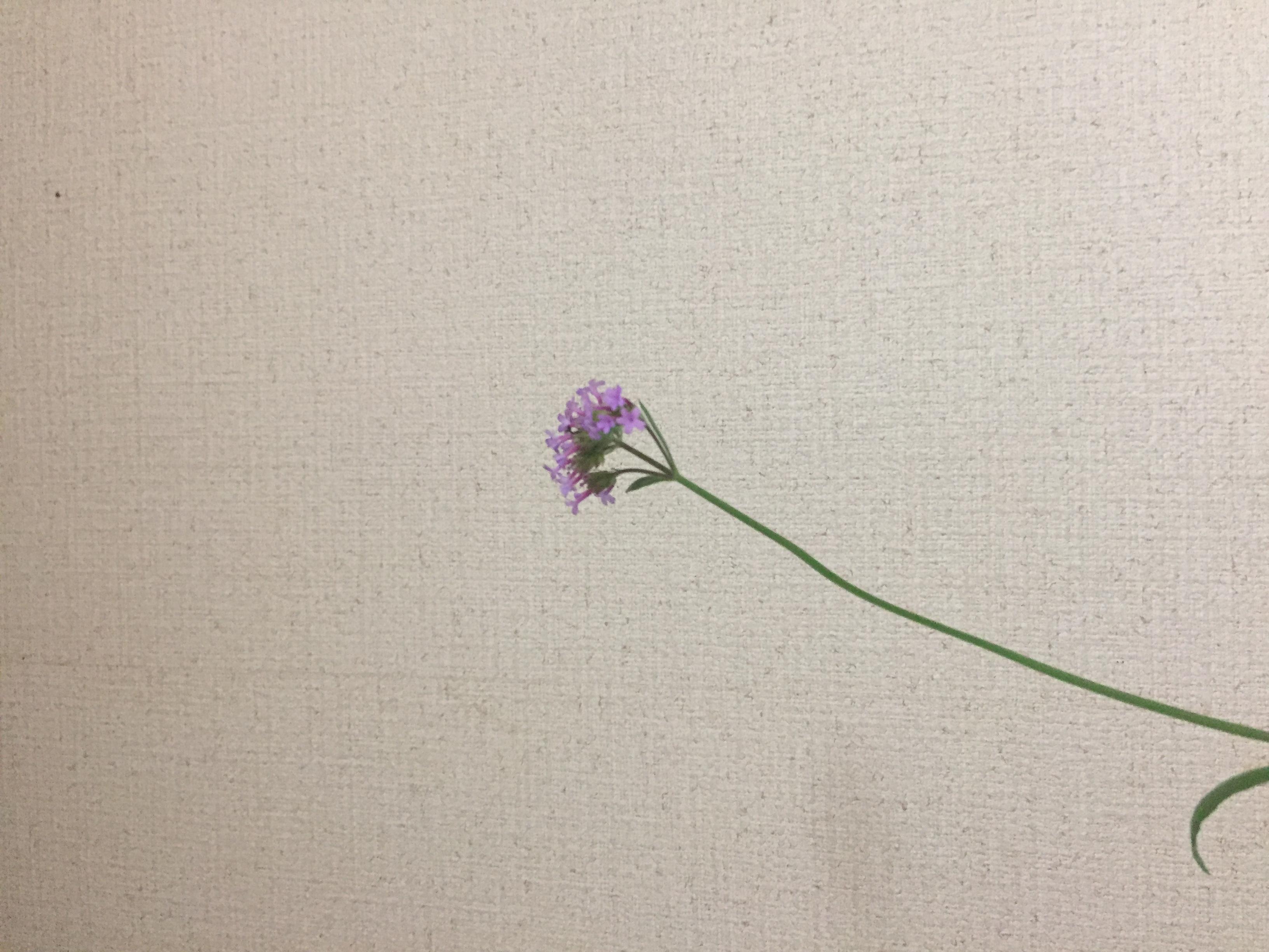 成彦 Shigehiko Bonsai /