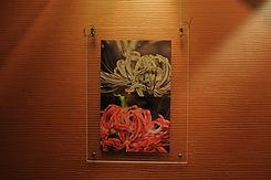 甲斐小百合 Sayuri Kai / 秋霜の侯 / 甲斐姉妹