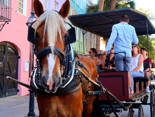Your All-Inclusive Guide to a Weekend in Charleston