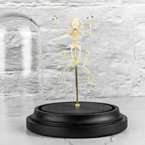 Squelette de grenouille sous cloche  DISPONIBLE uniquement au bar La Mandragore à Strasbourg (1 rue de la Grange) Prix : 130€ Réf : OS332