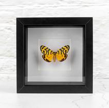 Petit papillon jaune (nom en cours de recherche)  DISPONIBLE uniquement au bar La Mandragore à Strasbourg (1 rue de la Grange) Prix : 60€ Réf : ENTO454
