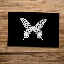 Tirage photo artistique 13x19cm  Papilio anthenor  DISPONIBLE Quantité : 5 Prix : 5€ Réf : TIR15  Envoi possible, frais de port en sus. Offert à partir de 3 tirages
