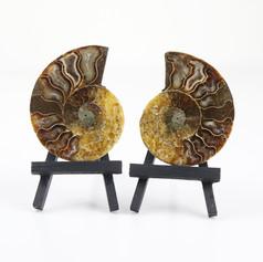 Fossile ammonite  Avec présentoirs  DISPONIBLE 20€ le lot  Photo non contractuelle