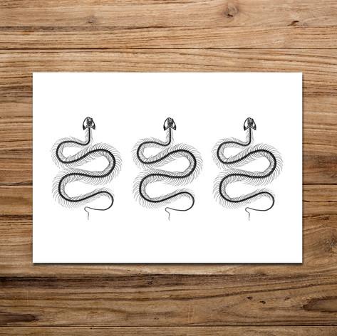Tirage photo artistique 13x19cm  Trio de squelette de serpent  DISPONIBLE Quantité : 6 Prix : 5€ Réf : TIR29  Envoi possible, frais de port en sus. Offert à partir de 3 tirages