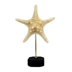 Grande étoile de mer sur socle  Dimensions avec socle : H27xL17cm  DISPONIBLE Prix : 30€ Réf : TAXI221  Envoi possible, frais de port en sus