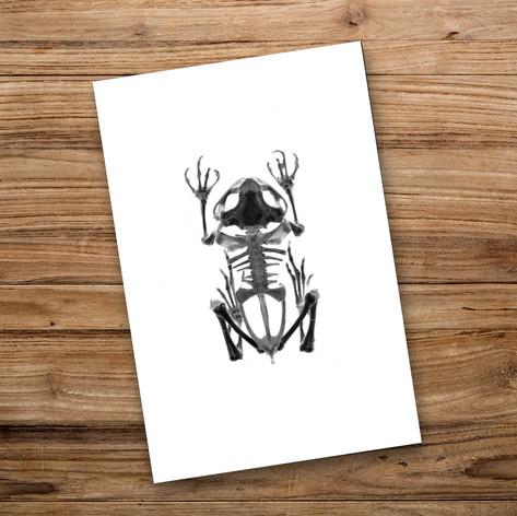 Tirage photo artistique 13x19cm  Squelette de grenouille  DISPONIBLE Quantité : 6 Prix : 5€ Réf : TIR03  Envoi possible, frais de port en sus. Offert à partir de 3 tirages