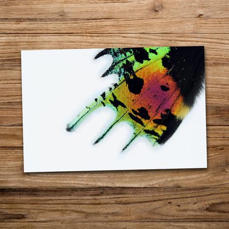 Tirage photo artistique 13x19cm  DISPONIBLE Quantité : 3 Prix : 5€ Réf : TIR26  Envoi possible, frais de port en sus. Offert à partir de 3 tirages