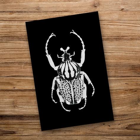 Tirage photo artistique 13x19cm  Goliathus orientalis  DISPONIBLE Quantité : 3 Prix : 5€ Réf : TIR01  Envoi possible, frais de port en sus. Offert à partir de 3 tirages