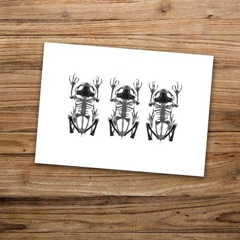 Tirage photo artistique 13x19cm  Trio de squelettes de grenouille  DISPONIBLE Quantité : 6 Prix : 5€ Réf : TIR04  Envoi possible, frais de port en sus. Offert à partir de 3 tirages