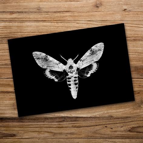 Tirage photo artistique 13x19cm  Acherontia atropos (Sphinx tête de mort)  DISPONIBLE Quantité : 8 Prix : 5€ Réf : TIR12