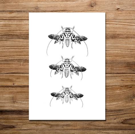 Tirage photo artistique 13x19cm  Trio Sternotomis virescens  DISPONIBLE Quantité : 5 Prix : 5€ Réf : TIR27  Envoi possible, frais de port en sus. Offert à partir de 3 tirages