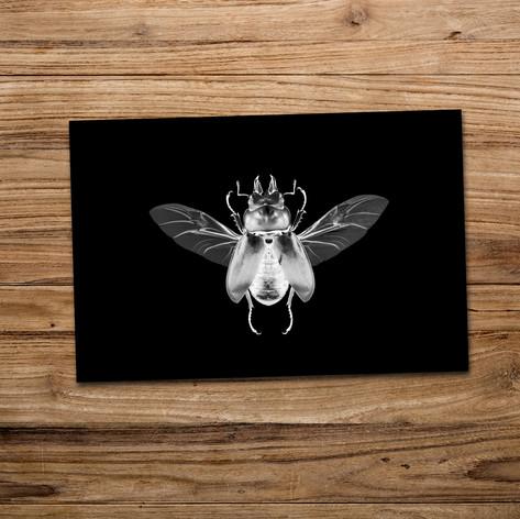 Tirage photo artistique 13x19cm  Allotopus rosenbergi  DISPONIBLE Quantité : 4 Prix : 5€ Réf : TIR05  Envoi possible, frais de port en sus. Offert à partir de 3 tirages