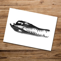 Tirage photo artistique 13x19cm  Crâne de crocodile  DISPONIBLE Quantité : 6 Prix : 5€ Réf : TIR28  Envoi possible, frais de port en sus. Offert à partir de 3 tirages