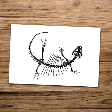 Tirage photo artistique 13x19cm  Squelette de Pogona  DISPONIBLE Quantité : 6 Prix : 5€ Réf : TIR31  Envoi possible, frais de port en sus. Offert à partir de 3 tirages