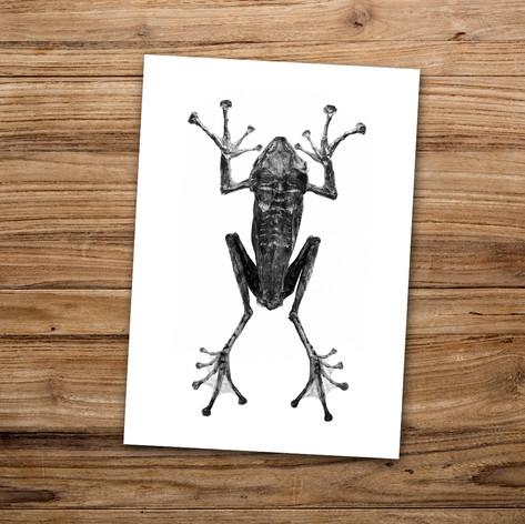 Tirage photo artistique 13x19cm  Grenouille géante  DISPONIBLE Quantité : 6 Prix : 5€ Réf : TIR09  Envoi possible, frais de port en sus. Offert à partir de 3 tirages