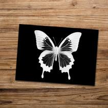 Tirage photo artistique 13x19cm  Papilio ulysses  DISPONIBLE Quantité : 7 Prix : 5€ Réf : TIR06  Envoi possible, frais de port en sus. Offert à partir de 3 tirages