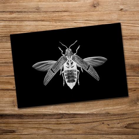 Tirage photo artistique 13x19cm  Catoxantha opulenta opulenta  DISPONIBLE Quantité : 6 Prix : 5€ Réf : TIR32  Envoi possible, frais de port en sus. Offert à partir de 3 tirages