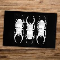 Tirage photo artistique 13x19cm  Trio lucanes  DISPONIBLE Quantité : 4 Prix : 5€ Réf : TIR11  Envoi possible, frais de port en sus. Offert à partir de 3 tirages