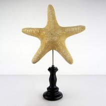 Grande étoile de mer  Dimensions avec socle : H32 L21cm  DISPONIBLE Prix : 30€ Réf : TAXI254  Envoi possible, frais de port en sus