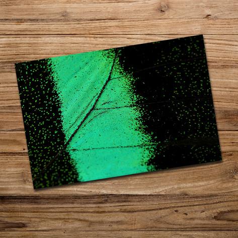 Tirage photo artistique 13x19cm  DISPONIBLE Quantité : 2 Prix : 5€ Réf : TIR17  Envoi possible, frais de port en sus. Offert à partir de 3 tirages