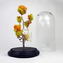 Squelette de chauve souris Roussetus leschenaulti suspendue à son arbre de lichen jaune et orange fait de cuivre et d'étain.   Dimensions : 50cm de haut avec le socle et 24cm de diamètre pour la cloche  DISPONIBLE Prix : 350€ Réf : OS328  Envoi possible, frais de port en sus