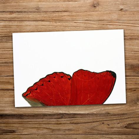 Tirage photo artistique 13x19cm  DISPONIBLE Quantité : 4 Prix : 5€ Réf : TIR24  Envoi possible, frais de port en sus. Offert à partir de 3 tirages