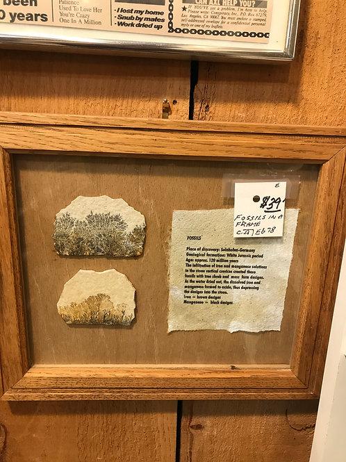Framed Fossils
