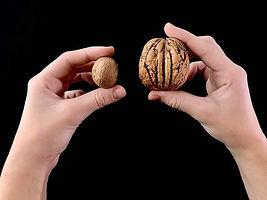 prostate walnut.jpg