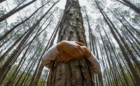 """Shinrin Yoku"" and Tree Hugging Benefits"