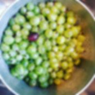 Gooseberries! #jam #scottishgooseberries