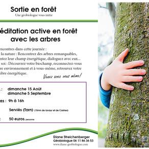 Méditation active en forêt , de belles découvertes vous attendent...