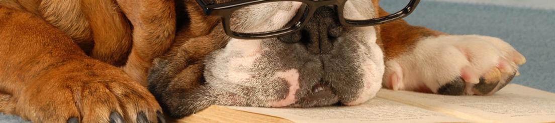 Praktisk viden hund kat I Nymose Dyreklinik