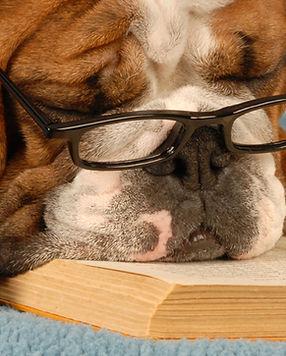A studing dog