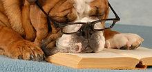 Smart собак
