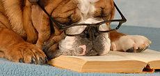 éducation canin tout plein