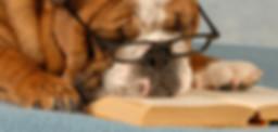 スマート犬