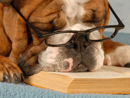 Attention Seattle Pup KIDS! Weekly Reading with Rover & Bow Wows & Books