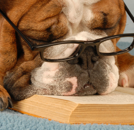 What is a dog's favourite book? Winnie the Pooch.