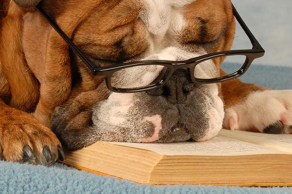 dog daycare, renrewhire