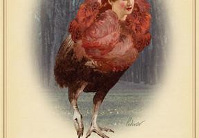Rare Birds of North America:                  The Bostonian Crimson Cassowary