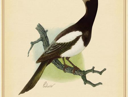 Rare Birds of North America:                 The North Atlantic Whale Wisher