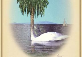 Rare Birds of North America:                  The Salton Sea Goose