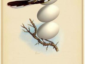 Rare Birds of North America:                 The Manitoba Precaris