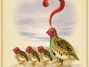 Rare Birds of North America:                  The ALLEGHENY Question MARK