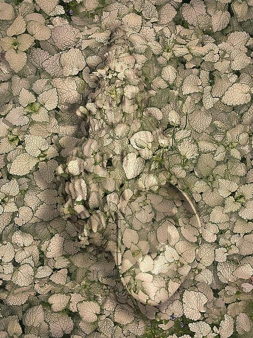 MILLEFIORI : Camouflage