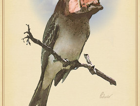 Rare Birds of North America:                  The Hippopotingale