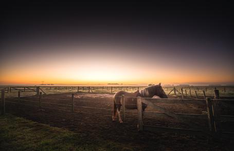 Sunrise in the Pampa